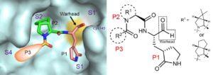 SARS-CoV-2 Main Protease Inhibitors Are Antiviral