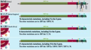 The SARS-COV-2 Variants