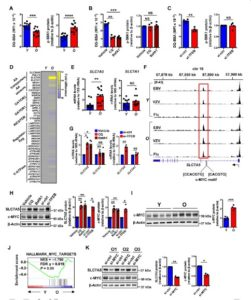 mTORC1 Late Endosomes Misdirects T-Cells