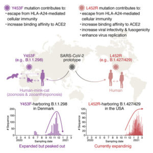 L452R Variant Evades 'Immunity', Is More Infective