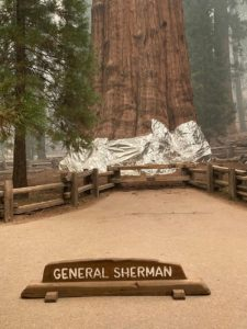 Fires Threaten Trees In Sequoia National Park
