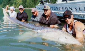World's Largest Freshwater Fish – Near Vancouver, BC